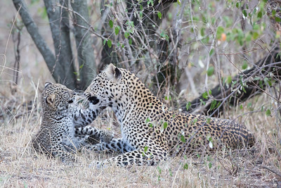 Leopard and cub