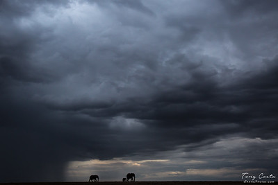 Elephants in a Storm