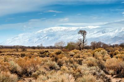 Winter Scenes in the Eastern Sierra
