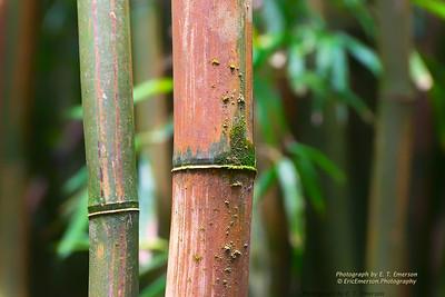 Haleakala Bamboo Forest #5