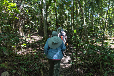 Walking/hiking through the rainforest