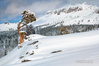 Boreal Snowshoe