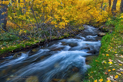 McGee Creek Fall Color