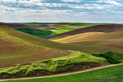 Eastern Washington's Palouse