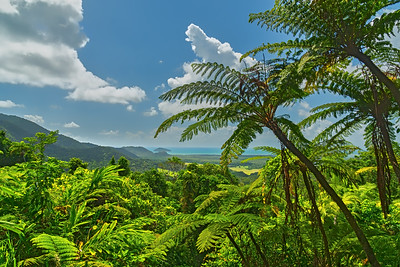 Daintree NP, Queensland