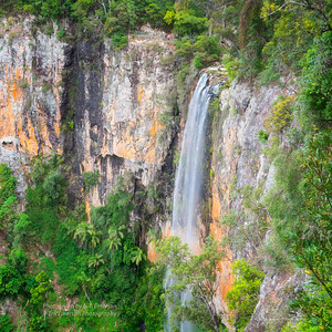 Springbrook NP, Queensland