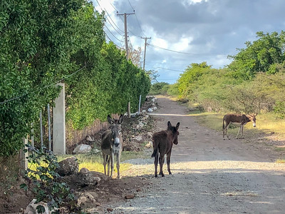 Donkeys, sheep, and goats (not to mention monkeys) roamed all over the island