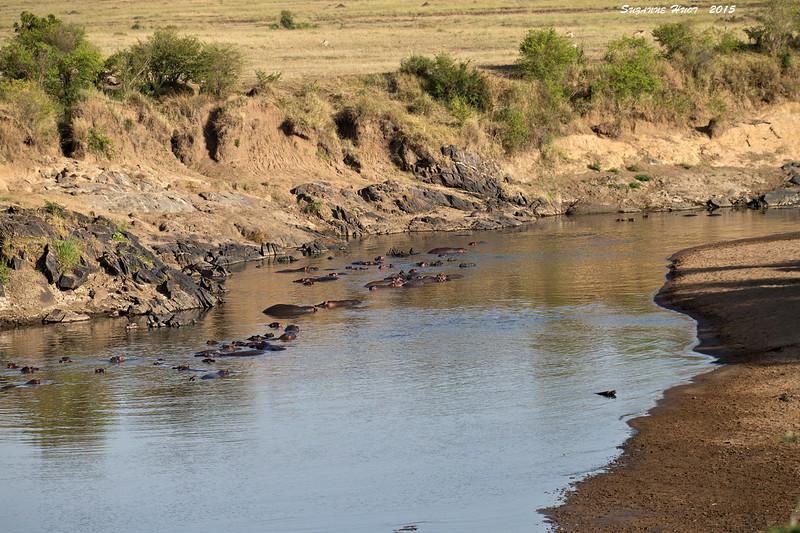 The famous Mara River.