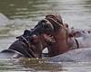 Evening at the Hippo Pool. Keekoruk. Kenya.