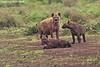 Hyena with Pups. Ngorongoro Crater ,Tanzania.