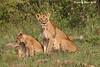 Masai Mara Family.