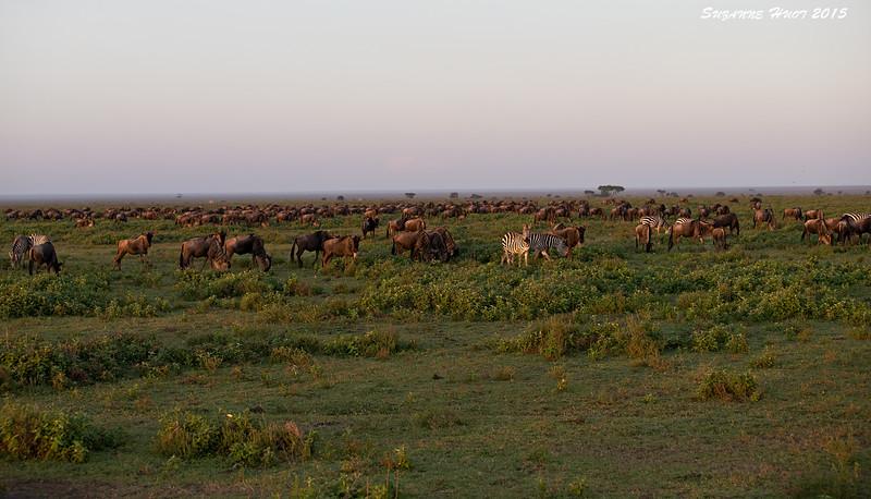 Sunrise on Ndutu plains. Tanzania.