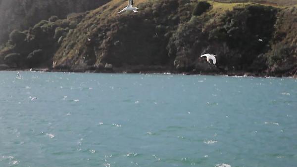 Bay of Islands Cruise, Paihia, NZ (5D0_8539)