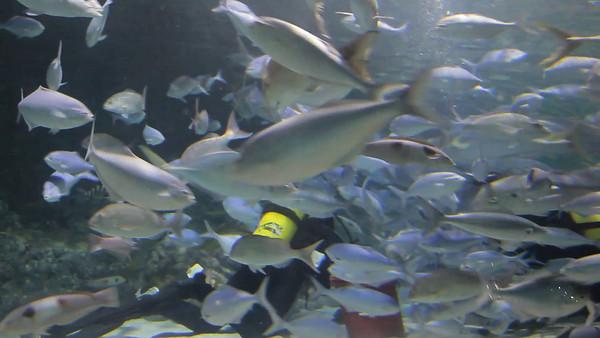 Kelly Tarlton's Underwater World, Auckland, NZ (5D0_8182)