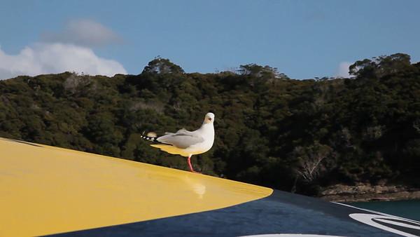 Bay of Islands Cruise, Paihia, NZ (5D0_8610)