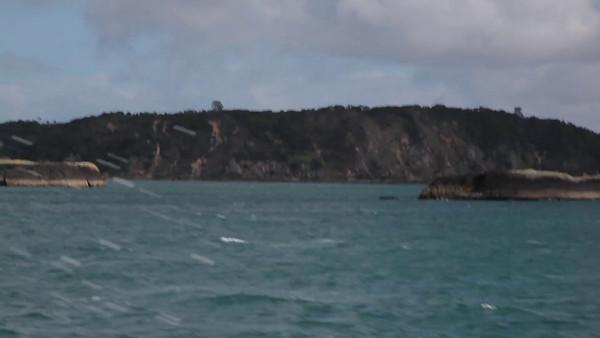Bay of Islands Cruise, Paihia, NZ (5D0_8527)