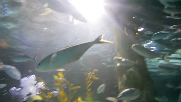 Kelly Tarlton's Underwater World, Auckland, NZ (5D0_8189)