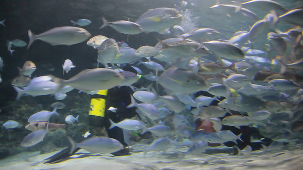 Kelly Tarlton's Underwater World, Auckland, NZ (5D0_8184)