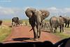 The confrontation. Amboseli National Park.Kenya.