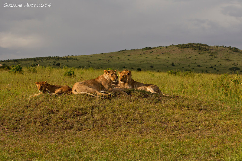 Sunrise in the Ngorongoro Crater.Male ,female and cub .