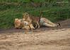 Time to wake up Mom.  Tarangiri, Tanzania.