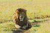 King of Ndutu
