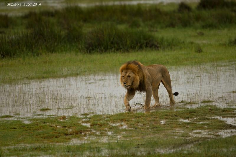 Heavy rains in Ndutu Tanzania