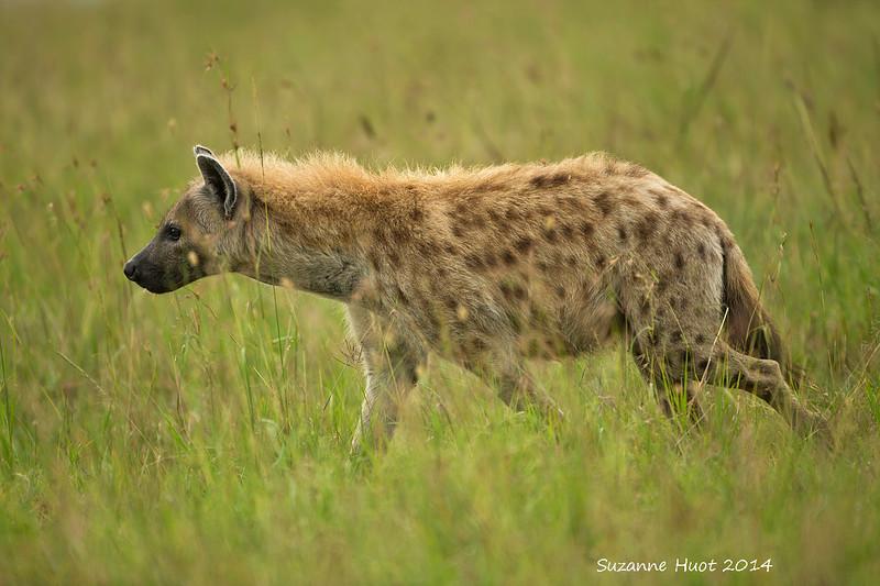 Masai Mara , Kenya.