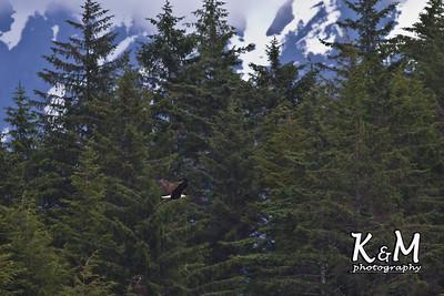 Alaska Trip Day (7) (31 of 138)