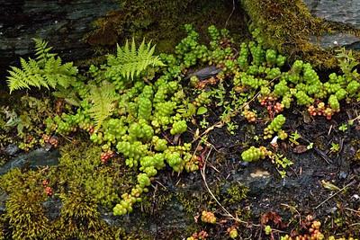 Lichens - Salmon Hatchery - Juneau, AK - 01