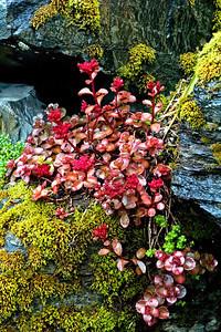 Lichens - Salmon Hatchery - Juneau, AK - 02