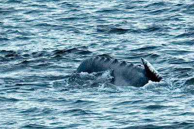 Humpback Whale - Frederick's Sound, AK - 01