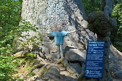 Diana & largest Sitka Spruce - Lake Quinalt, WA