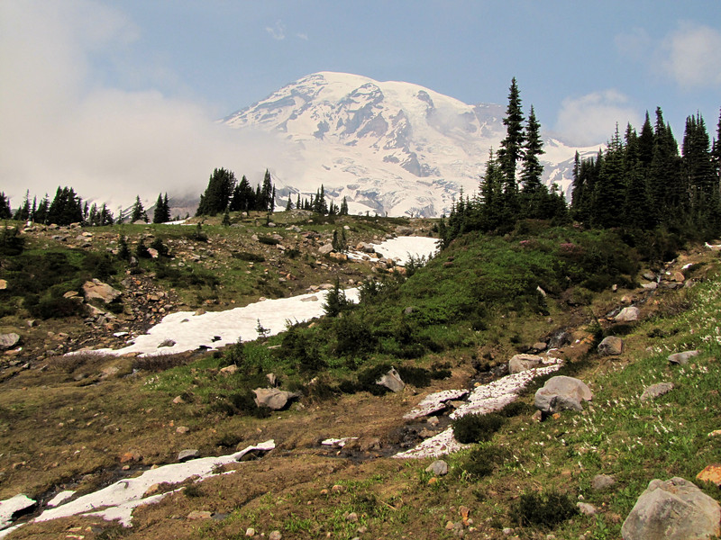 Erythronium montanum and Abies lasiocarpa (Paradise, Mount Rainier, Washington)