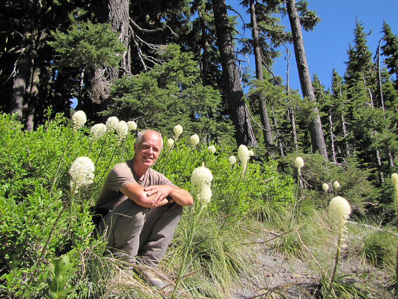 Xerophyllum tenax, Bear grass, (just on road to Timberline Lodge, from road 26, Mount Hood, Oregon)