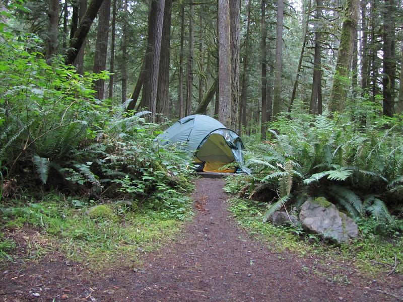 Campground Douglas Fir, Mount Baker Wilderness Area, near Canadian border