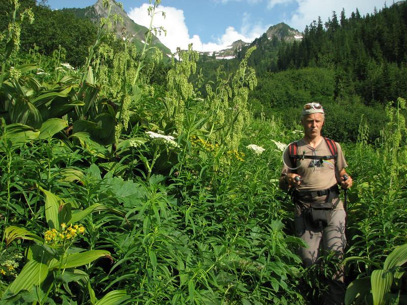 Hidden Lake Trail (between Hidden Lake Trailhead and Hidden Lake, North Cascades National Park, Washington)