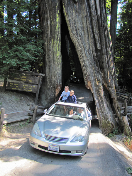 The Shrine Drive Thru Tree (Avenue of the Giants, Humboldt Redwoods State Park)