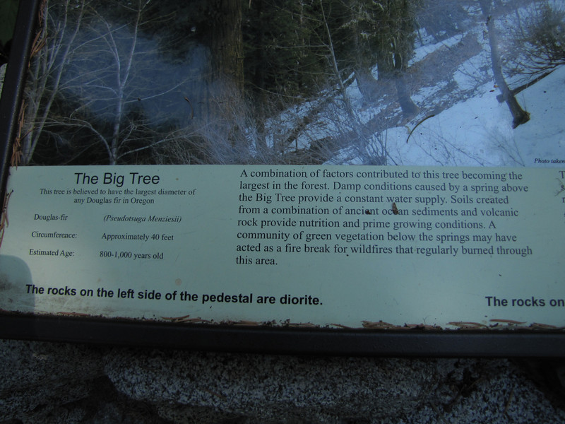 sign of the big tree, Pseudotsuga menziesii (Big Tree Trail, Oregon Caves National Monument)