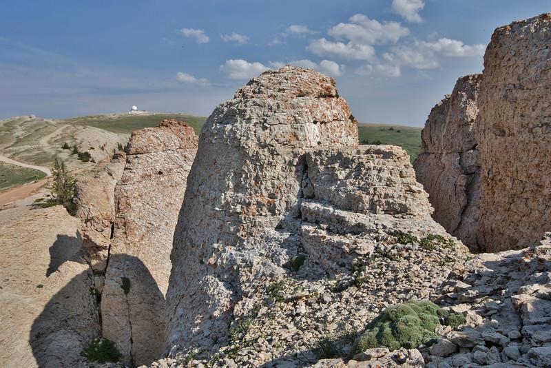Petrophytum caespitosum, Mat Rock Spirea on limestone rocks, Medicine Wheel Nat'l. Hist. Site.