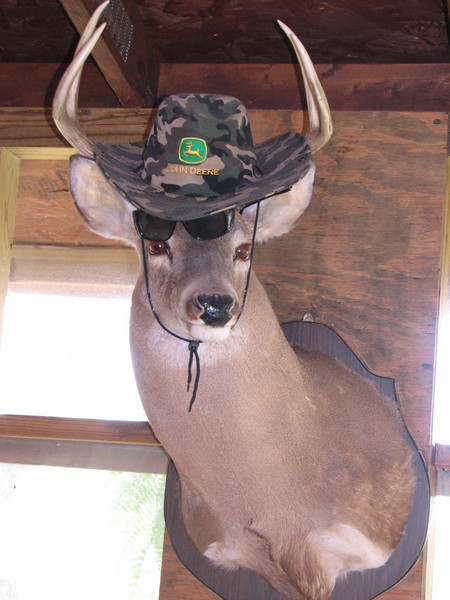 Deer (Fleets Southern Cooking Mayhew, MS)