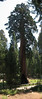panorama Sequoia 1