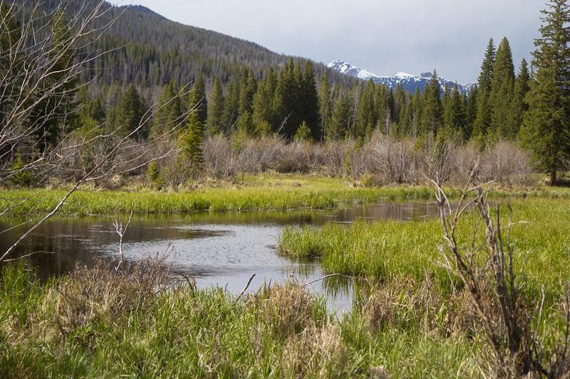 Moose habitat