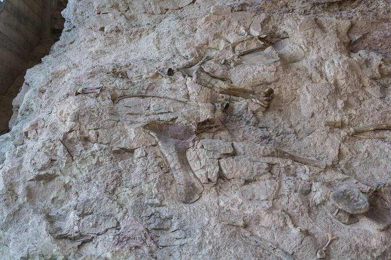 Fossil Bone Quarry