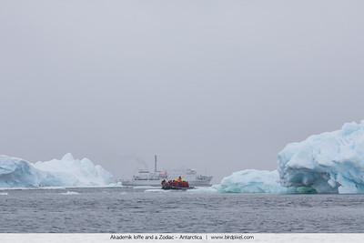 Akademik Ioffe and a Zodiac - Antarctica