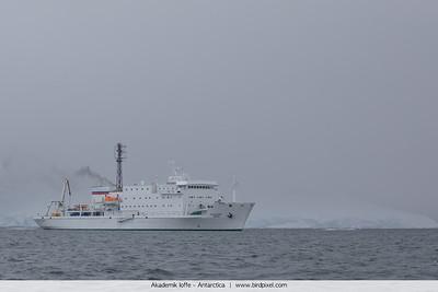 Akademik Ioffe - Antarctica
