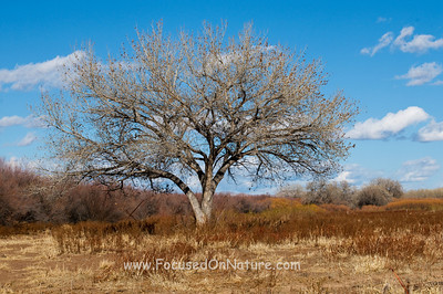Bosque Del Apache Tree