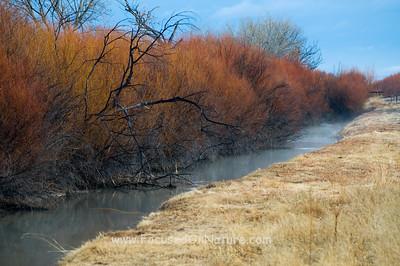 Bosque Del Apache Willows