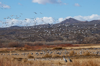 The Essence of Bosque Del Apache