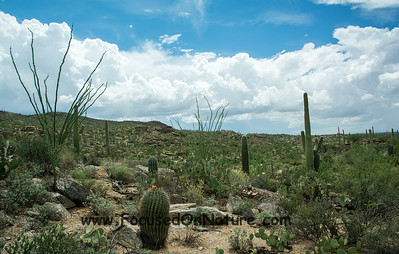 Sonoran Desert - Saguaro National Park